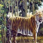 Тест: Немногим удается увидеть другого тигра на этом снимке: это вызов, который проявят ваши зрительные способности.