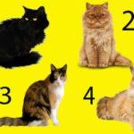 Тест: выбери кошку, и мы скажем вам, что нужно для хороших отношений.