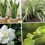 Тест: Выберите из 4 растений одно, чтобы прознать свой интеллект.