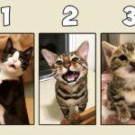 Тест: Выберите одну кошку, и узнайте чем вас одарила жизнь.