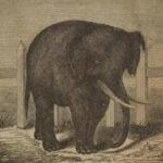 Тест: Сколько слонов на картинке вы смогли увидеть, назовите правильную цифру чтобы стать одним из первых.