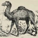 Тест: Найдите хозяина верблюда на изображении, проверьте сообразительность.