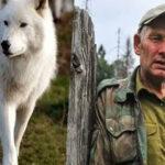 Лесник спас маленького волчонка, который каким-то образом оказался в его сарае. Волчонок прожил с ним до весны, а потом им пришлось расстаться.
