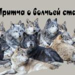 Притча о волчьей стае.