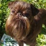 Собака с самой длинной бородой в мире, ему могут позавидовать все мужчины планеты земля.