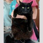 Ненужная людям кошка похудела ради того, чтобы найти новый дом.