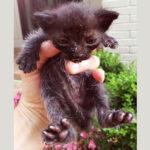 От маленького котёнка судьба отвернулась, но он до последнего верил, что его спасут.
