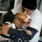 Двухлетнего питбуля хозяин оставил в питомнике, но он даже не подозревал, что пёс его найдёт быстрее, чем он его заберёт.
