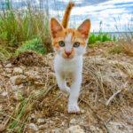 Кот сбежал от хозяина на завод по производству кормов для животных, когда он вернулся через год, его было не узнать.