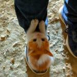 Убегая от собак рыжий котёнок прыгнул мне на ноги и громко кричал.