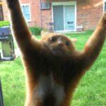Кот ворвался ко мне через окно, и захватил моё жилище.