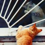 Оставили кошку одну дома на несколько дней, а она в это время через окно приводила к себе кота, а потом подарила нам котят.