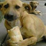 Собака Джуди была рада куску хлеба, пока не встретила доброго человека, на пустой дороге.