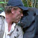 Воспитав малыша гориллы, мужчина даже не думал что животное вспомнит его спустя столько лет.