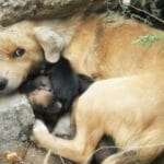 Бездомная собака прятала своих щенков в камнях, пока их не обнаружили люди.