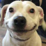 Бездомная собака со сказочной улыбкой.