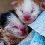 Новорожденные котята остались без мамы, но им повезло встретить добрых людей