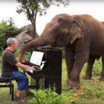 Слепой слон начинает энергично танцевать, когда слышит игру пианиста.
