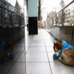 Собака, которая казалась брошенной, ждала свою хозяйку, чтобы уйти с ней с работы.