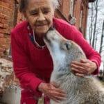 Старушке подарили щенка, а он вырос и спас её от незваного гостя, который хотел ей навредить.