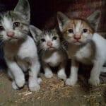 Уличная кошка ни кого не подпускала к своим котятам, пока женщина не решила им помочь всем сразу.