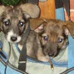 Возле ЖКХ сидели два щенка. Все работники учреждения прошли мимо, лишь дворник Баба Олеся помогла сиротам.
