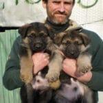 Породистые щенки находились на улице, пока молодая пара не обратила на них внимание