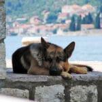 Старая собака ушла из дома, и лежала во дворе среди людей, и лишь одна женщина вернула ей молодость.