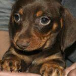 Грустная собака с щенками находилась возле гаражей, оказалось, что собака была породистая и домашняя.