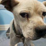 Большой пёс по кличке Такер, достойный уважения за свою нелёгкую жизнь