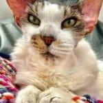 Старый кот долгое время жил на улице, но после того как его взяли к себе люди он вернул свой облик.
