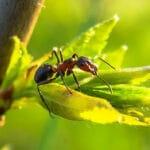 Виды муравьиных ферм
