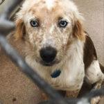 Бездомную собаку, каждый день дразнили дети, только потому, что она была уже старой и потеряла свой облик.
