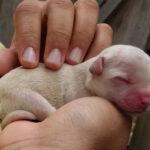 Белый щенок которому было не более двух дней оказался ненужным прежнему хозяину
