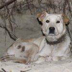 Поиск пропавших животных «ЕВА»