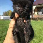 Кошка Фрося нашла своё счастье, благодаря прохожему мужчине, который забрал её в свой дом