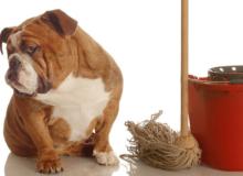 Животные пойдут в ветклинику тогда, когда там будет порядок и чистота