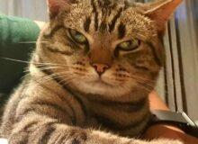 Чтобы узнать чем занимается кот в отсутствии хозяина, было решено надеть на него видеокамеру