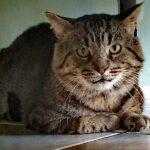 Королевское возвращение короля Артура. Как старый кот превратился из лохмотьев в богатство.