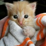 Грустный взгляд котёнка не позволил меня пройти мимо, и я взяла его в свой дом. Теперь осталось дать ему имя.