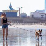 Особенности площадок для выгула собак: что из себя представляют и чем хороши?