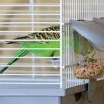 Клетки и товары для птиц