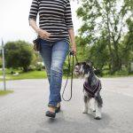 Как правильно подобрать рацион и корм для беременных и кормящих собак