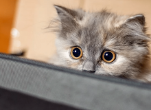 Язык тела кошки – умеете ли вы говорить по-кошачьи?